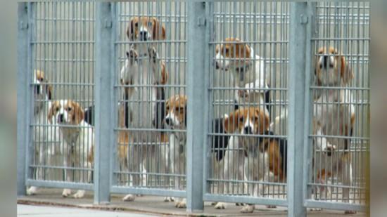 Für eine Zukunft ohne Tierversuche